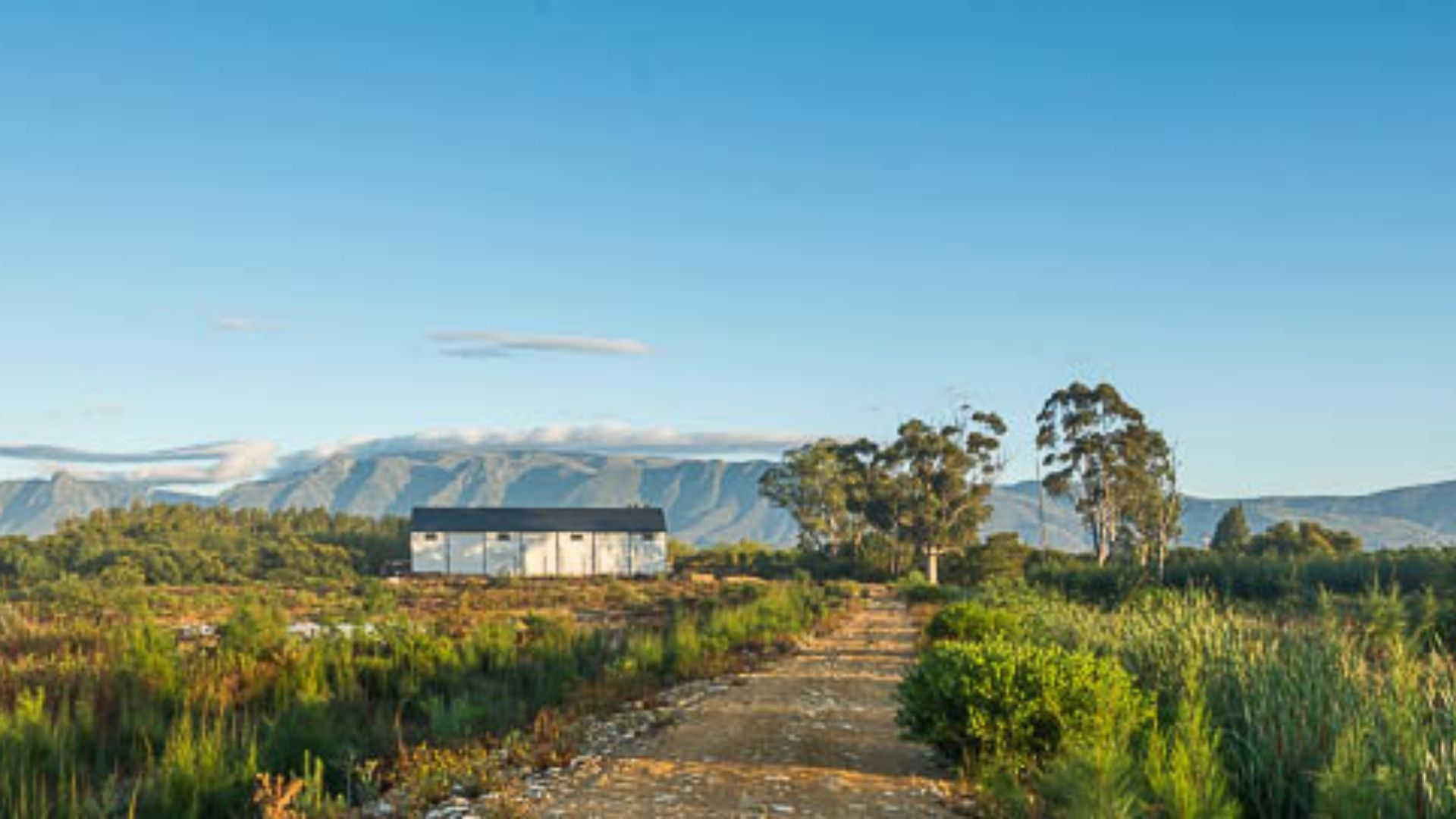 Olivedale Private Vineyards 5