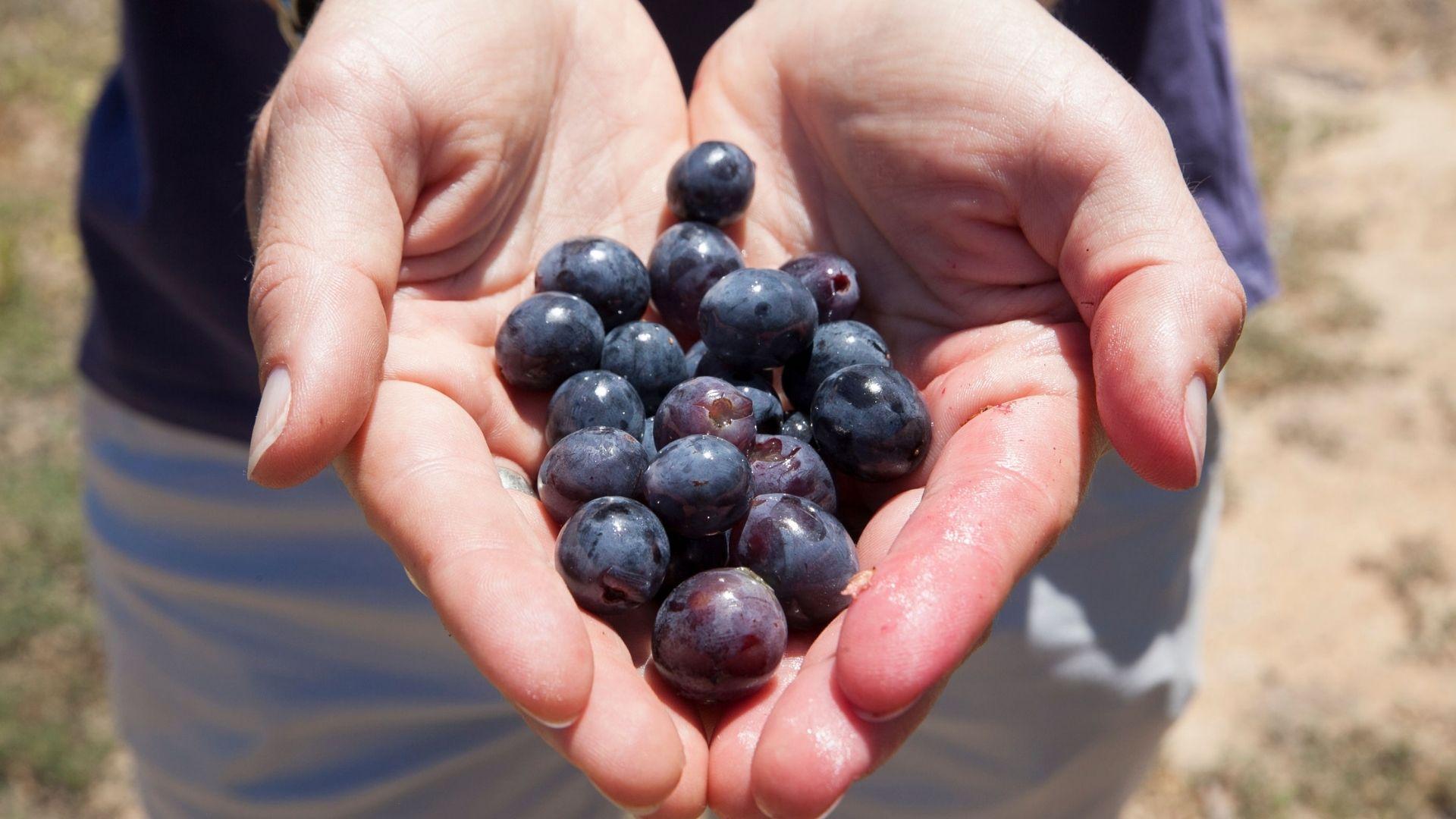 Trizanne Signature Wines 3